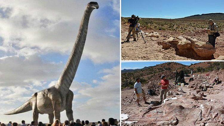 ឆ្អឹងដាយណូស័រថ្មី ដែលទើបរកឃើញ «ធ្វើឲ្យ T-Rex ក្លាយមកត្រឹមជាកូនដាណូស័រ» មួយប៉ុណ្ណោះ!