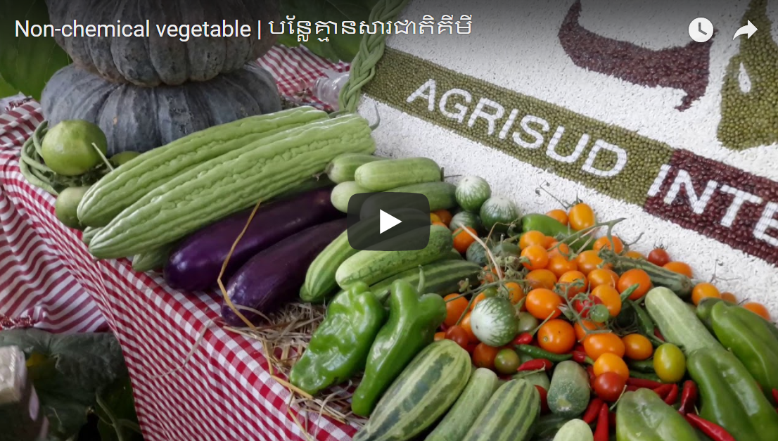Non-chemical vegetable | បន្លែគ្មានសារជាតិគីមី